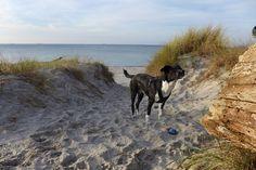 Mit Hund am schönen Ostseestrand