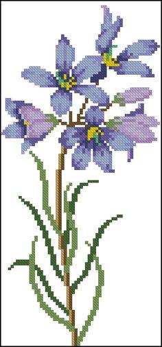 Finger Flower ( Cheiranthera aiternifolia)