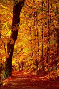 Ahh Fall! To walk among the leaves as they crinkle under my footsteps.