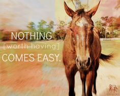 #horselover #horses #horse
