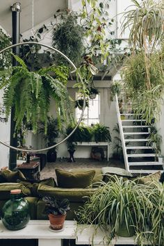 A living room jungle of hanging plants.