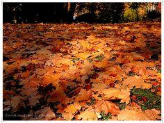 #EssenReisenLeben #Herbst #November