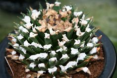 Cactus Plaza1