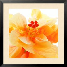 Posters: Ingrid Ulmer Poster Art Print - Bolero x 20 inches) Painting Prints, Fine Art Prints, Photo Print, Framed Artwork, Wall Art, Macro Flower, Orange Flowers, Custom Framing, Online Art