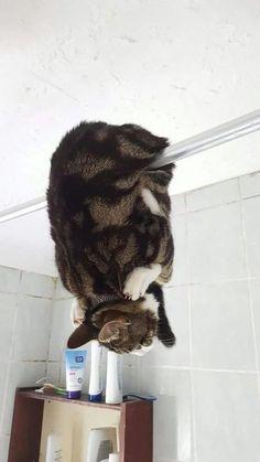 Cat's logic! Upside down