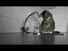 Cat Hunting Water Drops