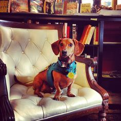 Road Trip with Ammo the Dachshund // Pet Friendly Shopping in Asheville, North Carolina