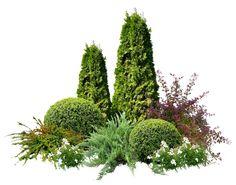 – Gardening Tips House Landscape, Garden Landscape Design, Small Garden Design, Evergreen Garden, Meadow Garden, Garden Deco, Garden Fencing, Front Yard Landscaping, Shade Garden