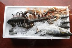 http://www.kilmorequayseafood.co.uk/category/4-icing-fish-gallery.html Image of the recently caught fresh seafood keeping cool in the ice box. Kilmore Quay uses the freshest seafood in their range of fish dishes including smoked salmon, trout & haddock. For more info please visit us online!