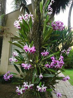 Trouxemos uma lista muito legal comBest 25 types of exotic tropical flowers for your home and Fresh Front Yard and Backyard Landscaping Ideas for 2019 Orchid Planters, Orchids Garden, Unusual Flowers, Amazing Flowers, Tropical Garden, Tropical Flowers, Hanging Orchid, Orquideas Cymbidium, Orchid House
