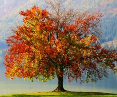 Google Image Result for http://fwallpapers.com/files/imagecache/960x800/images/autumn-tree-painting.jpg