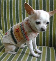 recycled wool dog sweater  http://www.craftstylish.com/item/40669/how-to-make-a-recycled-dog-sweater/page/all