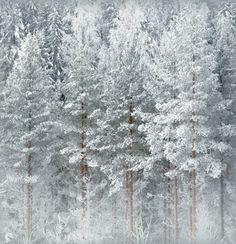 winter forest, Finland