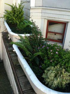 Plants in bathtub