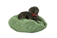 Shags Wags Pet Bed * Check out this great image  : dog beds