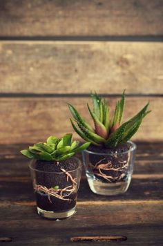 Succulent Favours in glass jars