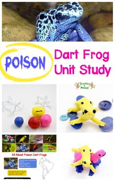 The poison dart frog is one of nature's deadliest creatures. Learn all about poison dart frogs with this poison dart frog unit study and poison frog craft! #unitstudy #thematicunit #frogactivities #earlylearning