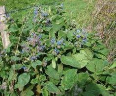 Les plantes aromatiques comprennent les plantes utilisées comme épices, aromates ou condiments, parfois combinées en mélanges aromatiques. La distinction entre ces trois groupes est confuse et dépe…