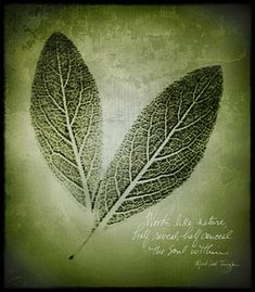 """nature's mystery 
