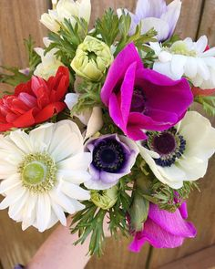 Anemones at @blossomandbranch instagram / blossomandbranchnc.com