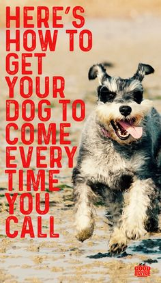 dog learning,dog tips,dog care,teach your dog,dog training Dog Training Techniques, Dog Training Tips, Training Pads, Training Equipment, Potty Training, Easiest Dogs To Train, Cute Dogs Breeds, Dog Fence, Dog Hacks