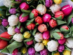 Overhead shot of assorted bouquet of tulips in bloom in spring, Vienna Beautiful Rose Flowers Images, Flower Images, Flower Pictures, Unique Flowers, Tulip Wedding, Wedding Flowers, Spring Wedding, Flower Backgrounds, Flower Wallpaper