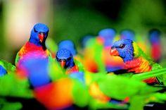 Currumbin Wildlife Gold Coast Queensland