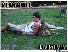 36 of the Best Meanwhile in Australia Pictures - Clicky Pix Funny Pictures With Words, Funny Animal Pictures, Funny Photos, Funny Images, Funny Animals, Uk Photos, Australia Pictures, Australia Funny, The Funny