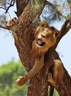 Playful King