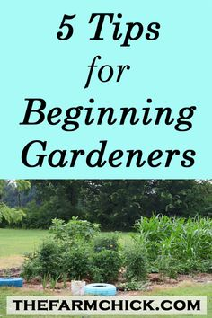 Get some great tips for the beginning gardener. Start off right and harvest fruits and vegetables from your very own garden in no time!