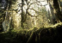 9. Hoh Rainforest, Forks
