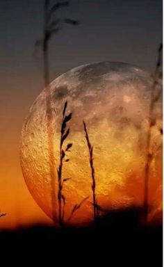 How amazing is this picture wow what a wonderful snap the full moon in orange color. Beautiful Moon, Beautiful World, Beautiful Images, Moon Pictures, Pretty Pictures, Cool Photos, Moon Pics, Ciel Nocturne, Nature Photography
