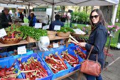 Rhubarb shopping at Portland farmers market. #farmersmarket #greenmarket