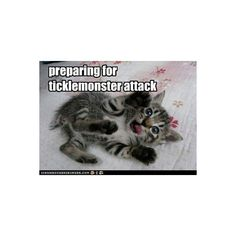 Lolcats 'n' Funny Pictures of Cats - I Can Has Cheezburger? - Page 18 ❤ liked on Polyvore featuring funny, quotes, funny pictures, animals and pictures