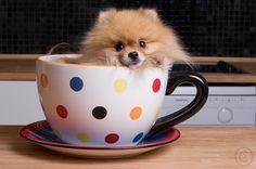 Well aren't you as cute as a puppy in a teacup! :)