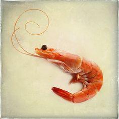 http://kathywolfe.com/wp-content/uploads/2013/03/red-shrimp.jpg
