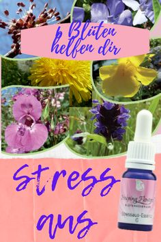 Stress durch Angst- nimm die Stress-aus Mischung der Helping Flowers Blütenessenzen Stress, Angst, Table Decorations, Flowers, Florals, Anxiety, Flower, Bloemen