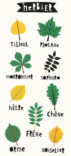 Reconnaître les arbres parisiens