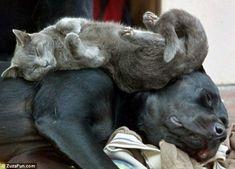 6-5 Katter sover7