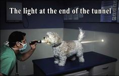 Funny photo with caption dog the light at the end of the tunnel