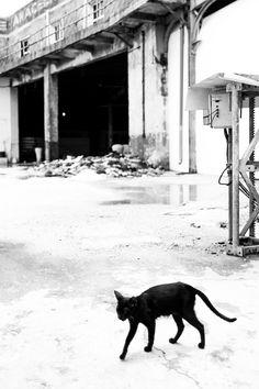 """""""Kafka on the Shore (via Luis Montemayor) """" Kafka On The Shore, Art Drawings, Moose Art, Hunting, Kitten, Animals, Gatos, Cute Kittens, Animaux"""