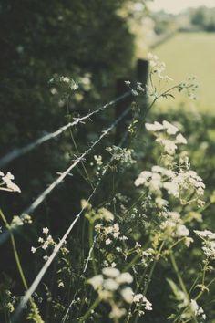 Photo Scrap:  darknessshine:  → vintage blog ♥←
