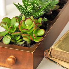 DIY Succulent Planter - in Mini Librarie Drawer