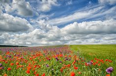 """Photograph """"Poppy Field of Dreams"""" by Guenther Reissner on 500px"""