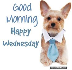 Cute Good Morning Happy Wednesday Puppy                                                                                                                                                                                 More