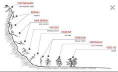 Great explanation and visualization of bonsai styles. Bonsai Tree Types, Bonsai Plants, Bonsai Garden, Plantas Bonsai, Ikebana, Bonsai Styles, Mini Bonsai, Miniature Trees, Tree Care