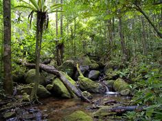 Congo Rainforest | Congo Rainforest located in Central Africa is the second largest on ...