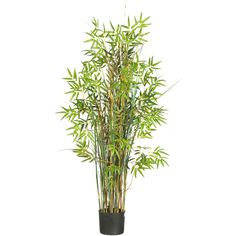 Nearly Natural 5-Ft. Bamboo Grass Silk Plant (16850 RSD) ❤ liked on Polyvore featuring home, home decor, floral decor, bamboo silk plant, whimsical home decor and bamboo home decor