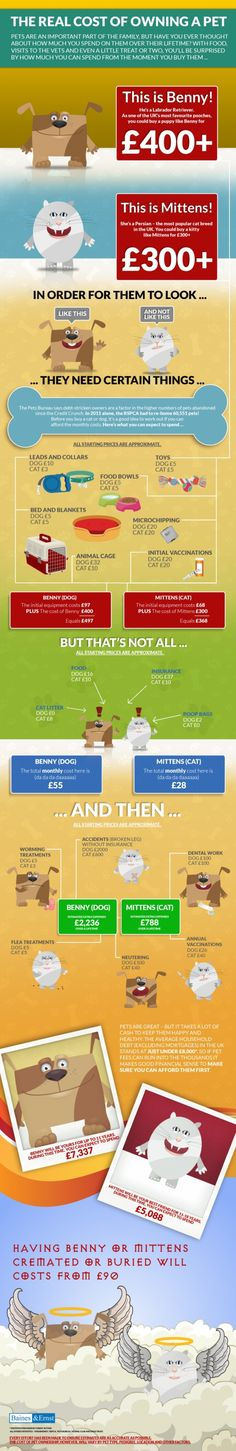 The Real Cost Of Owning A Pet: A MUST READ for anyone considering expanding their family!