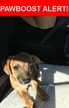 Is this your lost pet? Found in Cedar Park, TX 78613. Please spread the word so we can find the owner!  Brown   Nearest Address: Near S Cougar Ave & Colt St